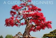 Bonsai Tree / Bonsai Tree – how to take care of this miniature tree? Advice based on personal experience. Useful tips on bonsai planting and special care for leaves!