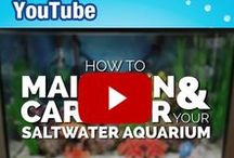 "YouTube / Big Al's Channel is all about Pets! With our specialized knowledge of aquarium products, we offer you the latest information and ""how to"" videos to help you build your personal aquarium. Your hobby is our passion, and we want to provide you with all the support and information you need regarding products, setups, new pets, and reviews."