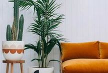Plants // indoor and outdoor ideas / Ideas, tips and inspiration for creating a living haven in your home.  Providing inspiration for using pot plants inside or creating beautiful small courtyard and patio gardens, no green thumb required!  No outside space?  Fling open your doors, windows and conservatories to bring a little of the outside back in.