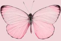 Motylki ❤
