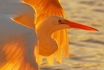 Mother Nature Creatures / adorable animals,birds, reptiles, marine species...