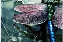 The  world of insects / Ladybugs, butterflies, spides, dragonflies, bees. Beautiful insects, important creatures.