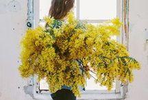 Color palettes , yellow / Yellow,giallo,κίτρινο,amarillo