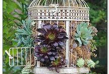 GARDEN > birdcages