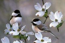 Ptaszki ❤