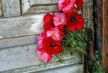 Red Poppy Cottage