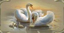 Animacje zwierzęta - ptaki
