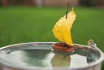 Seasons :: Fall / by ahimsa3