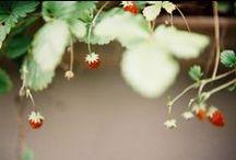 Seasons :: Summer / by ahimsa3