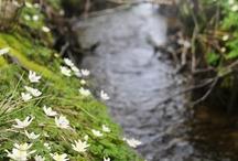 Seasons :: Spring / by ahimsa3