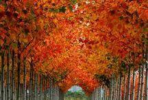 Fall Beauty / by Darla Rigdon