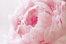 Fantastic Flowers / Real & all flower inspiration