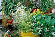 One Summer Garden