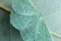Fauna / by Hipocampo Transparente