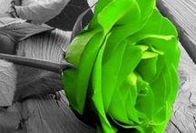 Gallant Green...