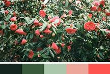 Colour / Colour psychology, colour palettes, we've got all of your colour inspiration in here.