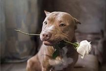 Pitt Bulls - Not So Tough! / by Pam Traves