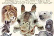 Watercolor animals / Excellence Beyond Compliance