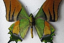 Flutterby Collection / Please pin (or 'like') only 10 - 15 of my pins per day - thank you / by Connie Lee