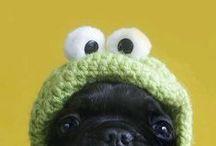 Pugs!!