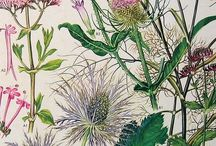 Botanical Theme