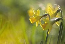 Spring / Seedlings, ducklings, lambs and the glorious dawn chorus! Springtime brings new life, new hope and the last of the bitter winter frost.  As we stretch out of our sleepy slumber, we greet the milky sunshine, life begins and the realisation that soon our world will burst into colour.