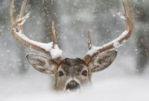 Let it snow ❄