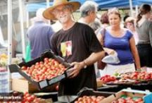 Sunshine Coast Foodies / Food on the Sunshine Coast, QLD / by Frozen Sunshine