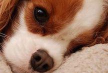 Baby animals♥♥♥♥♥♥♥♥♥♥♥♥