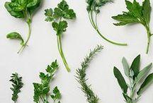 Herb Gardening / by Angela