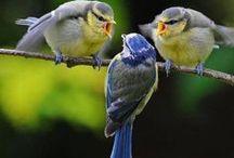 Birds of a Feather... / by Lisetta Estevez