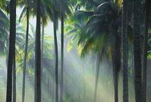Trees & Mist / trees and mist