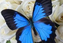 Butterfly :) / Totally Love Butterflies :) Reminds me of my Grandad :) xxx