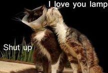LOL Cats :D / LOL Cats :D xxx