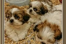 Puppies January 2015