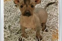 Puppies March 2015 / Puppies we have had during the month of March in the year 2015.