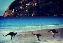 Australia / australia, travel, trip, animal
