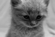 Cats...meow!!!!!