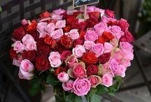 Roses / Ruusu-unelmia