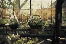 Terrarium and greenhouse