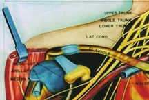 Orthopaedic Surgical Anatomy Teaching Collection / The images in this collection focus on anatomical areas of interest to an orthopaedic surgeon. They were collected over the long career of Irving Rehman, Ph.D., who taught anatomy as a faculty member at the University of Southern California (USC) School of Medicine, at the Naval Medical Center San Diego, and at Orthopaedic Hospital in Los Angeles where he last used the collection for residency training.   More info here: http://bit.ly/1zow2YW