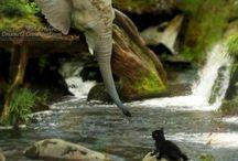 Cute Animals / Ihanat eläimet