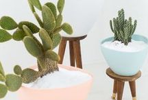 CACTI | THE TRIBE / We love those little prickly suckers.