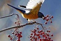 Ptaki / Skrzydlaci w ogrodzie