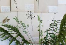 Plant•*