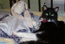 Tuxedo & Black Cats / Black cats & Tuxedo cats. / by Denise