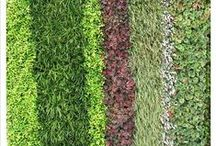 Vertical Garden Plant Suggestions / Some ideas to help you create a successful vertical garden / green wall.
