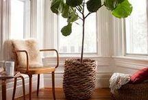 Home & Sunroom Plants