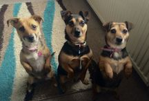 Millie, Benji and Rosie / My 3 adorable doggies ❤️