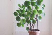 °O Be Green O° / Plantes, pour donner une touche de vert à une déco intérieur.